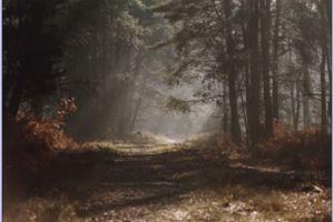 Balades matinales en forêt vous attendent