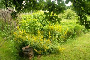 Jardin bio naturel