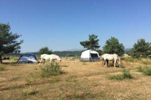 camp au milieu des chevaux vue 360°sans aucun vis à vis  sur massif du sancy, chaine des puys, puy de Gourdon et Puy d' Olloix